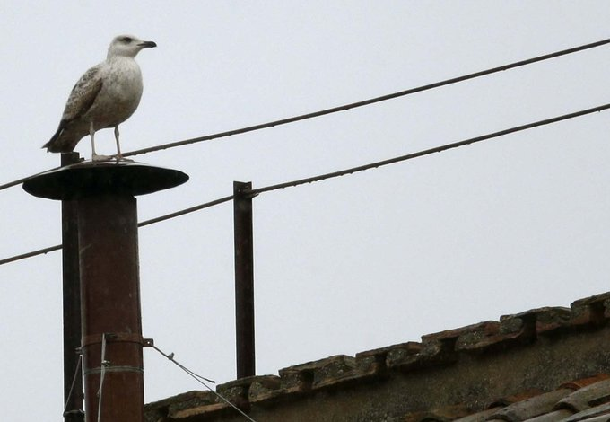 Two Guys a Girl and a Catholic Podcast Episode 88: The Conclave Seagull Is Watching